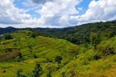 Deforestation outside Bwindi Impenetrable National Park, Uganda